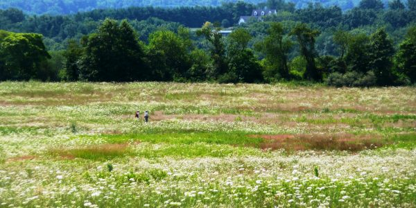 CIDER MILL hikers in wildflowers